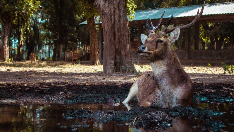 Dit hert geniet werkelijk van zijn eenzaamheid royalty-vrije stock fotografie