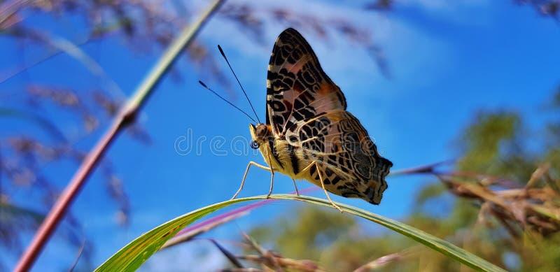 dit is mijn favouritfoto's en ogenblik omdat de niet enge vlinder wanneer ik uit mijn hand neem stock afbeelding