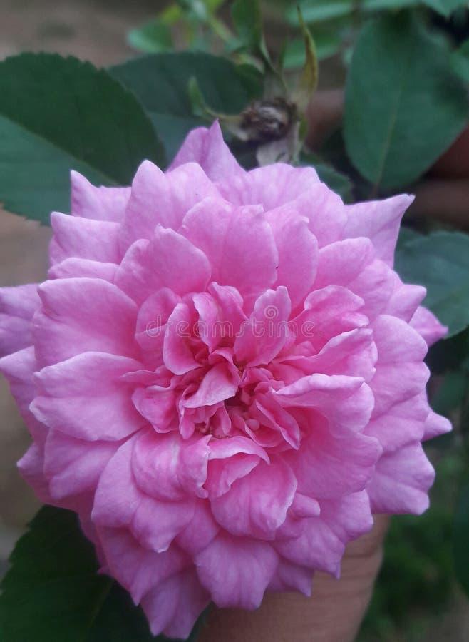 Dit is mooi in de tuin royalty-vrije stock afbeeldingen