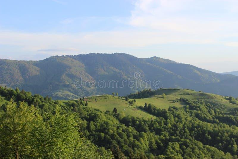 Dit mooie suset in bergen stock foto