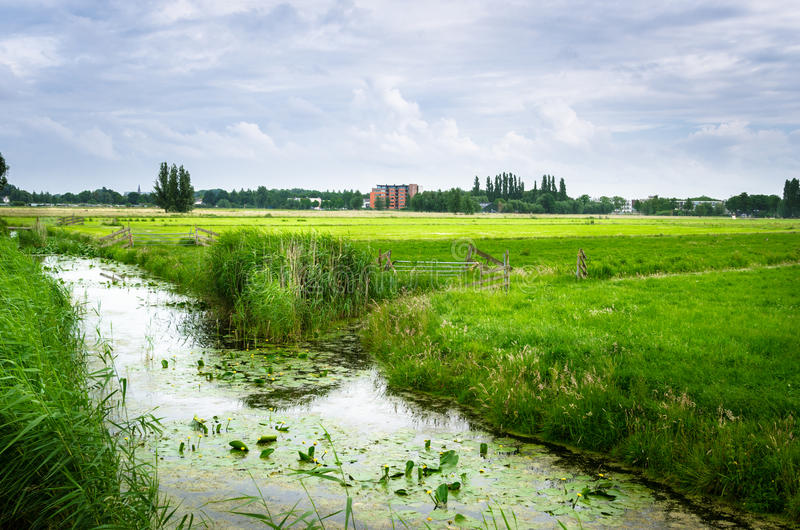Ditch along a Field in the Countryside of the Netherlands stock photography