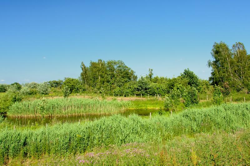 Ditch in a wetland landscape trees in Kalkense Meersen nature reerve, Flanders, Belgium. Ditch in a marsh landscape with field with canal with reed and trees in stock image