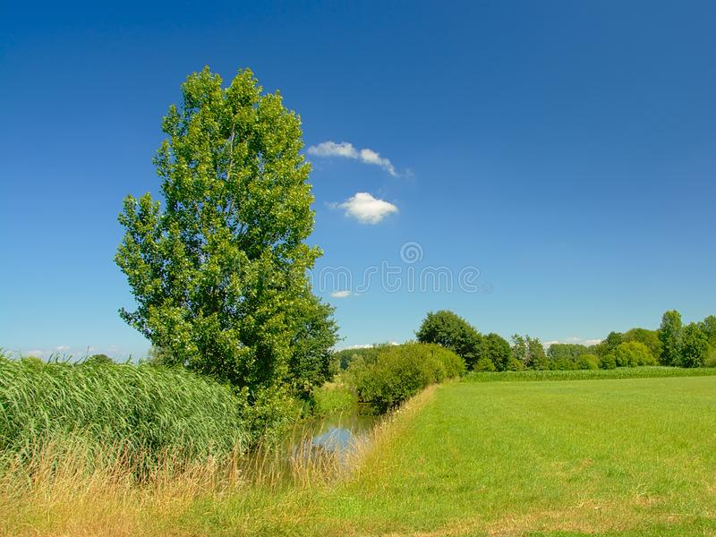 Ditch with reed along a field with trees under a clear blue sky in Kalkense Meersen nature reserve, Flanders, Belgium. Ditch with reed along a field with trees royalty free stock image