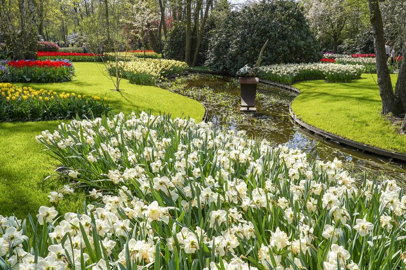 A ditch surrounded by a lawn and flower beds with daffodils and Tulips royalty free stock images