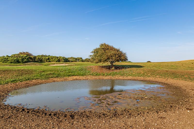 Ditchling Beacon Dew Pond. A dew pond on the top of Ditchling Beacon in Sussex, on a sunny summers evening stock photos