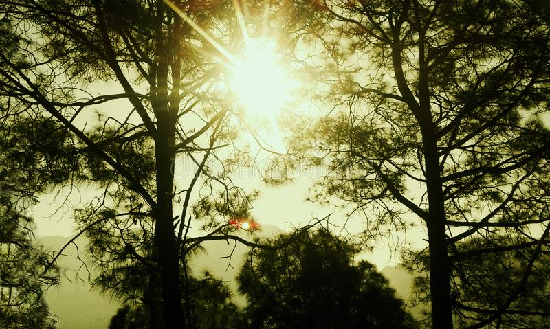 Ditt eget solsken arkivbild