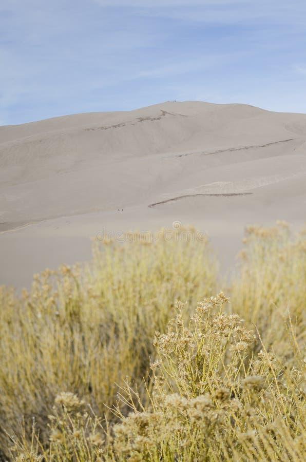 diun wielki park narodowy prezerwy piasek obrazy royalty free