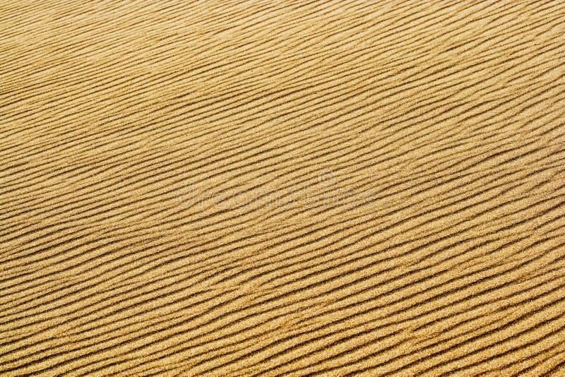 diun wielkie park narodowy piaska fala obraz royalty free