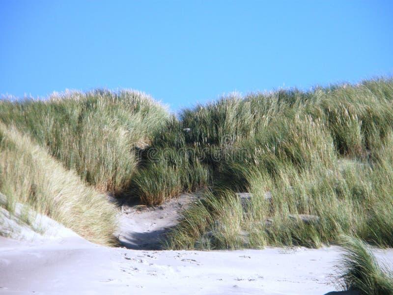Diuny Północnego morza wyspa zdjęcie royalty free