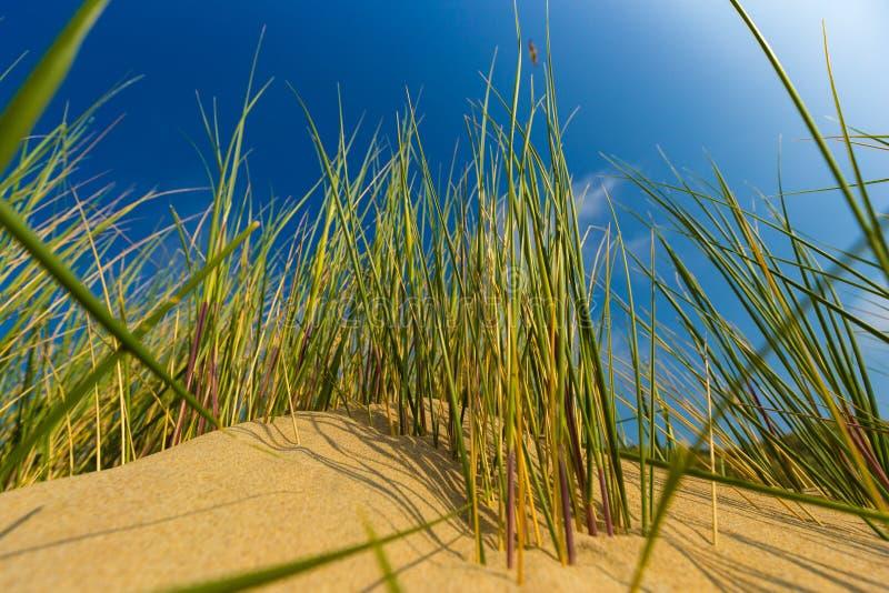 Diuny przy Belgijskim północnym dennym wybrzeżem przeciw chmurom i trzcinowej trawie chmury pierzastej i stratusu zdjęcia royalty free