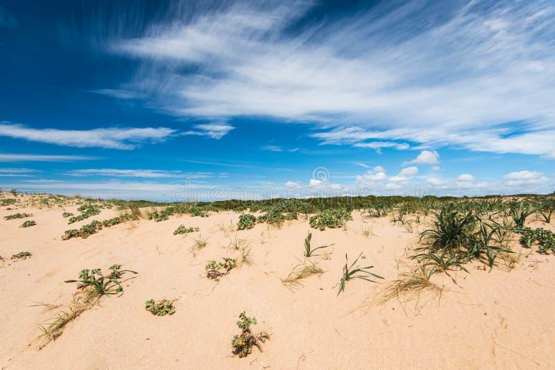 Diuny w naturalnej rezerwie Zahara De Los Atunes, Hiszpania fotografia stock