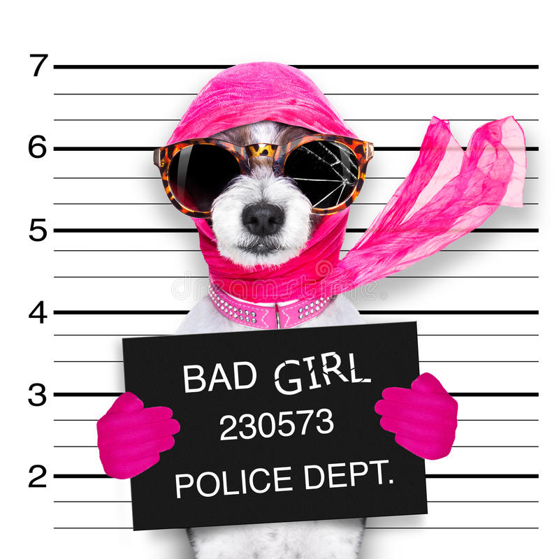 Free Diva Chic Dog Royalty Free Stock Image - 76756866