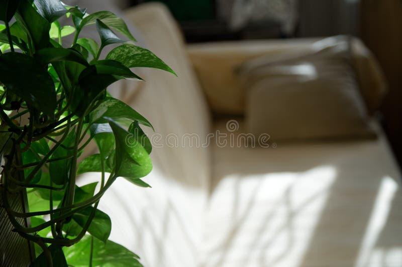 Divan confortable avec des pots de fleurs dans le salon, concept de maquette photos stock