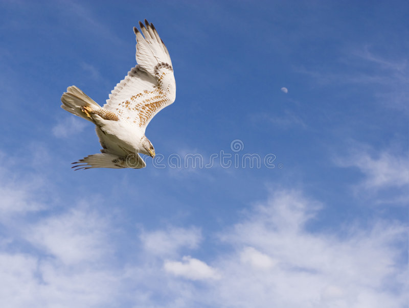 Download Dive stock photo. Image of spread, daylight, wing, moon - 755396