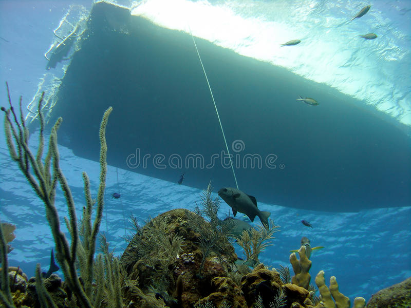 Dive boat and reef. The silhouette of a dive boat can be seen above the reef through the clear water. The coral reef below features gorgonian sea fans and other stock images