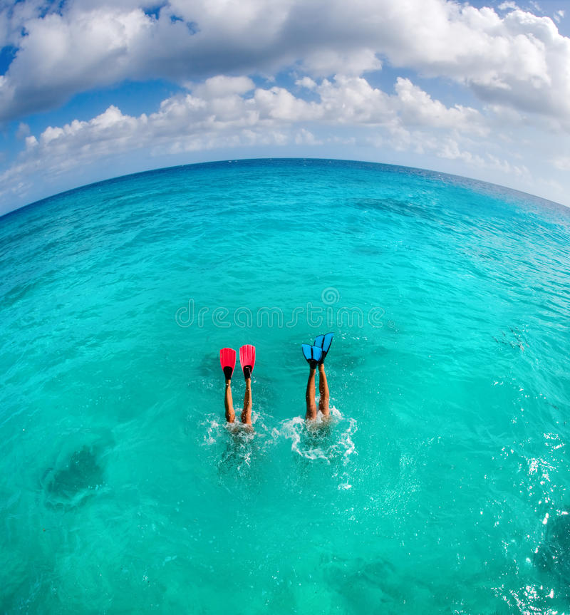 Dive couple. Couple free dives in turquoise waters in tahiti