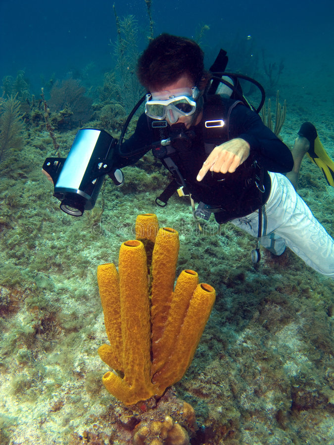 Dive Master pointing at a Sea Sponge. In the Cayman Islands royalty free stock photos