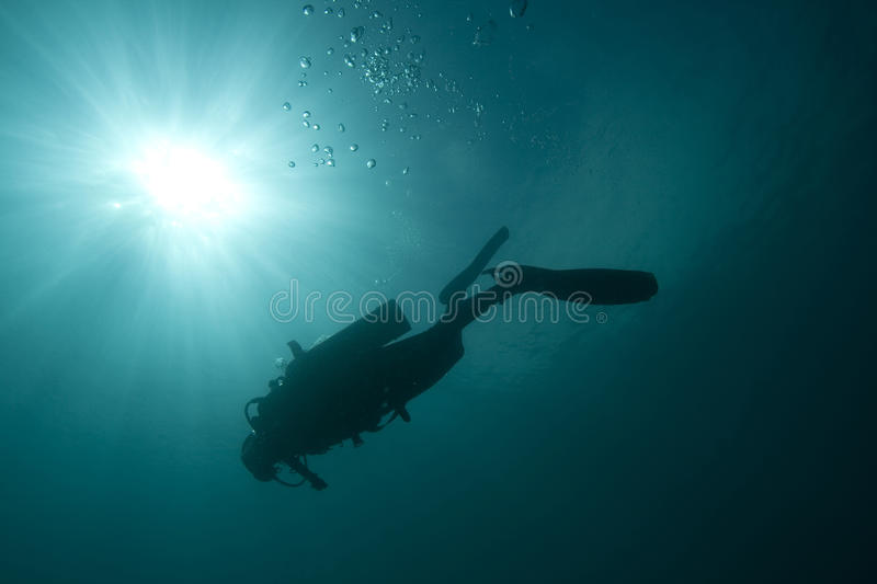 Download Diver stock image. Image of travel, bahia, diver, breathing - 12144275