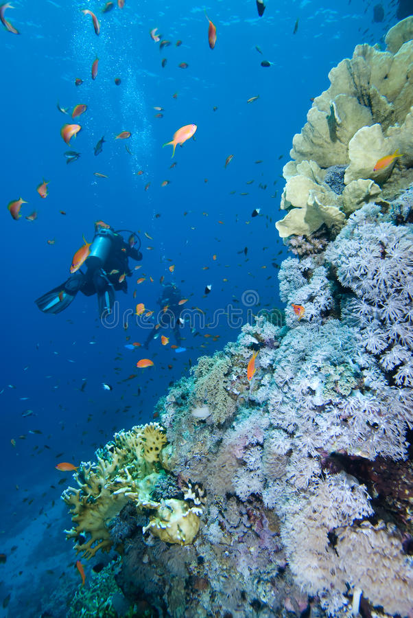 Free Diver Alongside A Tropical Coral Reef Royalty Free Stock Images - 11384279