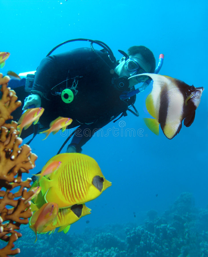 Free Diver And Butterflyfishes Stock Image - 7470371