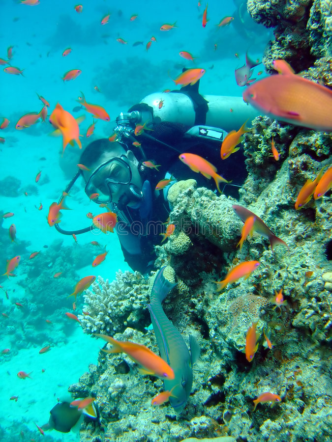 Free Diver And Coral Stock Image - 1396391