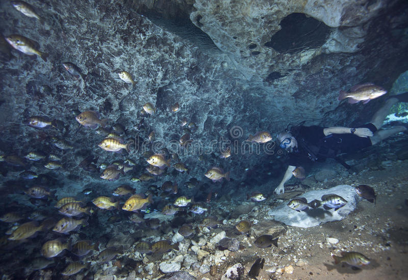 Diver and Blue Gill - Blue Springs Cavern. A baby boomer scuba diver swims into the Blue Springs cavern entrance and a large school of Bluegill swim deeper into stock image