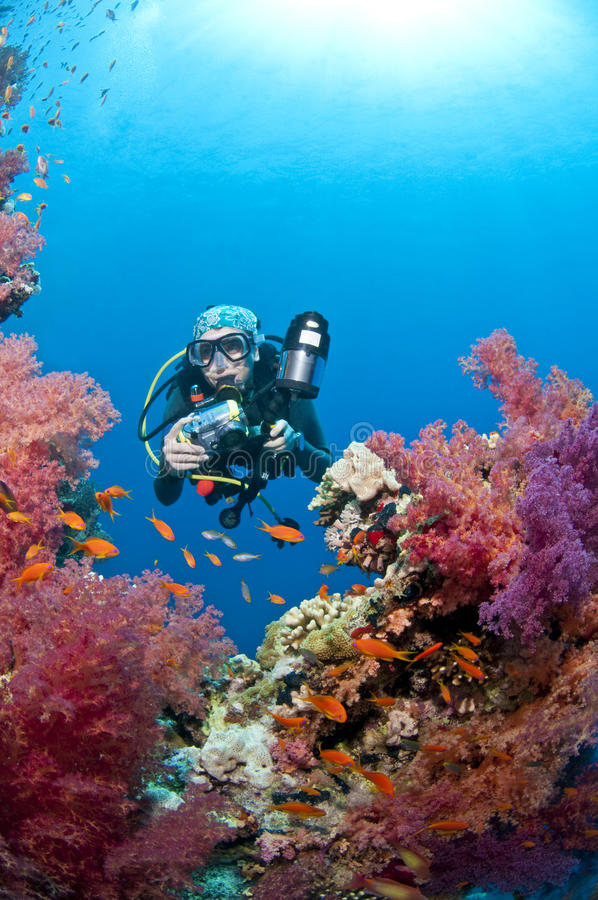 Download Diver With Camera, Underwater Photo, Red Sea Stock Image - Image: 12533099