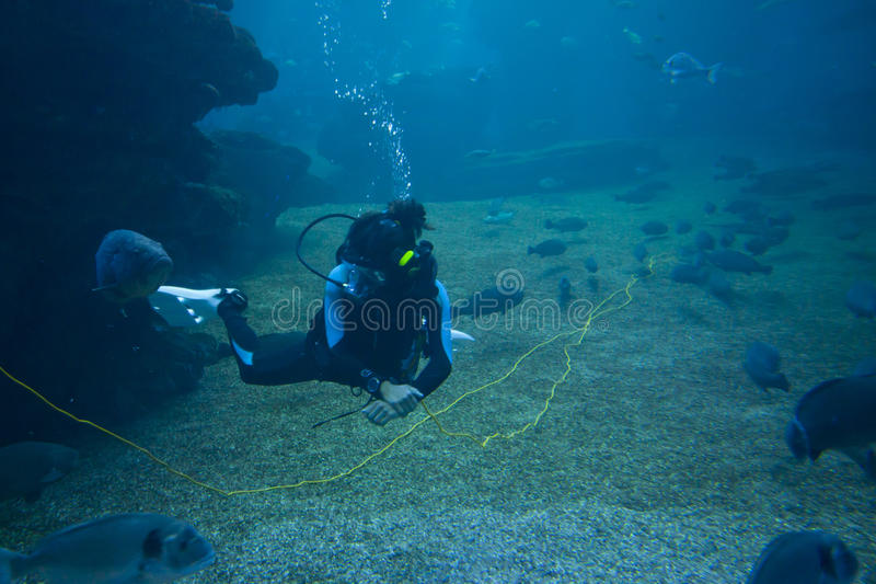 Diver with colorful exotic tropical fishes and sharks underwater in aquarium. royalty free stock photography
