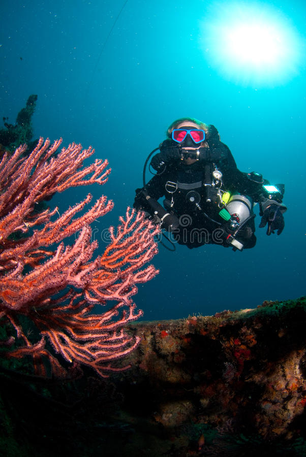Download Diver and coral stock image. Image of wall, circuit, water - 15050755