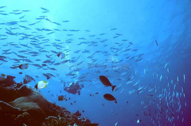 Diver Descending royalty free stock photography