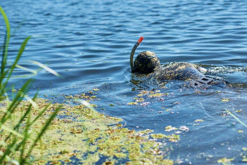 Diver in een vochtig pak met masker en snorkel onder water in het meer stock foto's