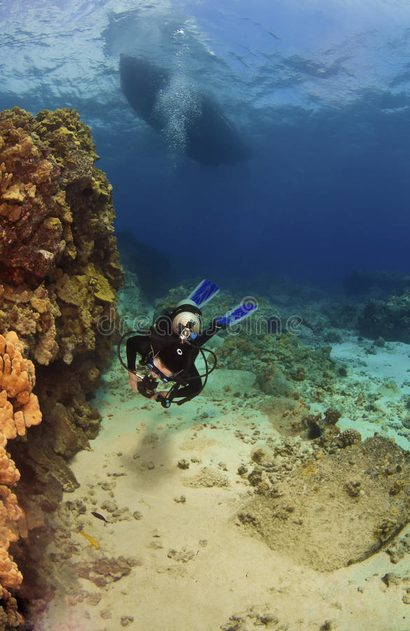 Free Diver Exploring A Reef In Kona Hawaii Royalty Free Stock Photography - 21601247
