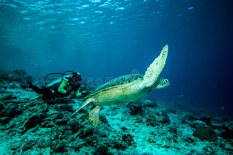 Download Diver And Green Sea Turtle In Derawan, Kalimantan, Indonesia Underwater Photo Editorial Stock Image - Image of ecotourism, mydas: 46787004