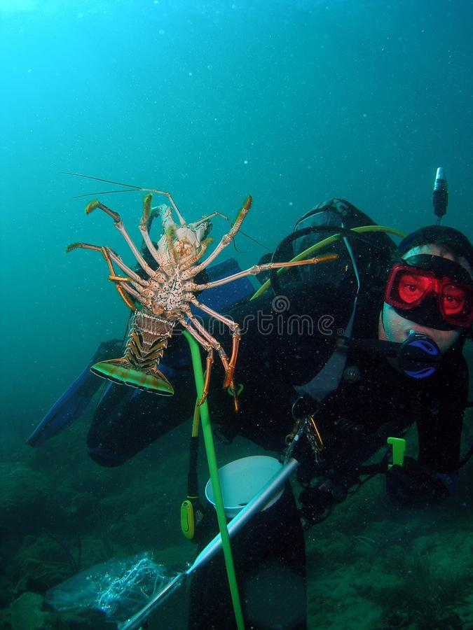 Diver and his Lobsters stock photos