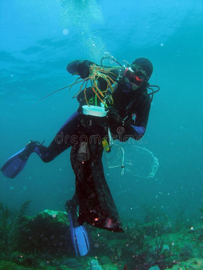 Diver and his Lobsters stock images