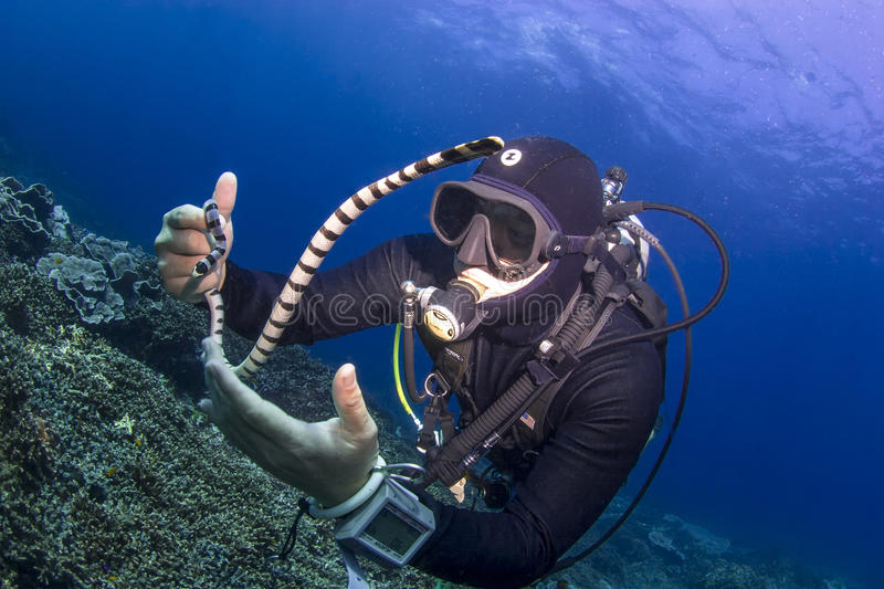 Diver Holding A Seasnake Editorial Photography