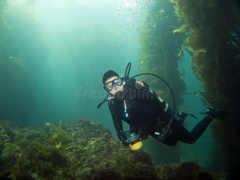 Diver looking into the camera in Catalina. Scuba Diver looking into the camera in Catalina stock photos