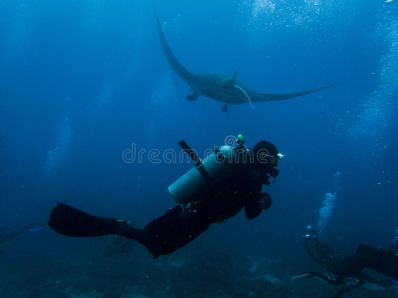 Diver with a manta ray stock image