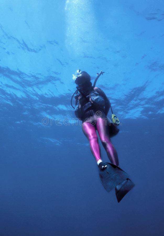 Diver in pink lycra. Woman scuba diver descending into the ocean in a flashy pink lycra royalty free stock photography