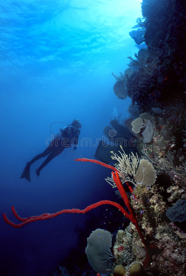 Diver and Red finger sponge royalty free stock photos