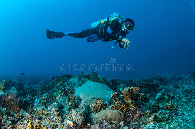 Diver is swimming above the coral reefs in Gili, Lombok, Nusa Tenggara Barat, Indonesia underwater photo royalty free stock images