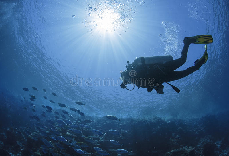 Diver swims in a Red Sea royalty free stock images