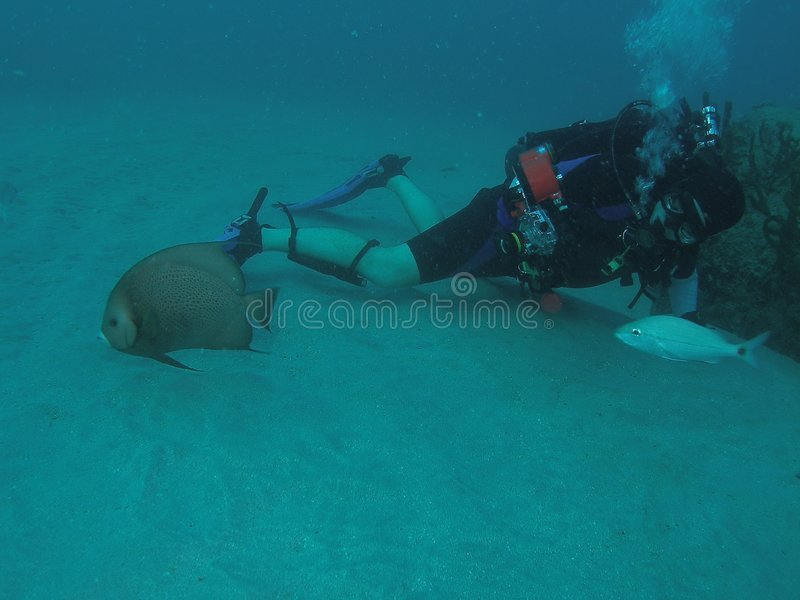 Diver with underwater Camera stock images