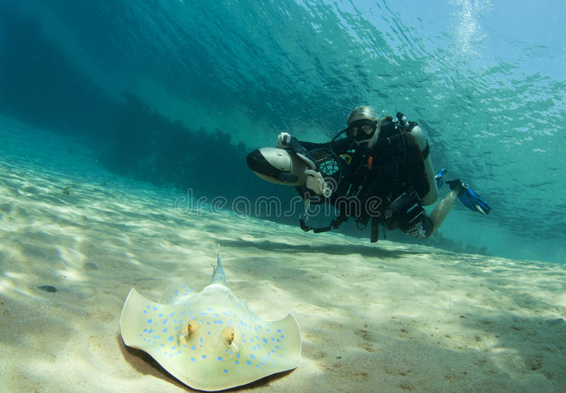 Diver on underwater scooter with sting ray royalty free stock photography