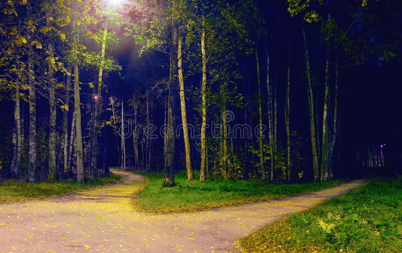 Divergence foot-path in the park at night. Autumn landscape royalty free stock images