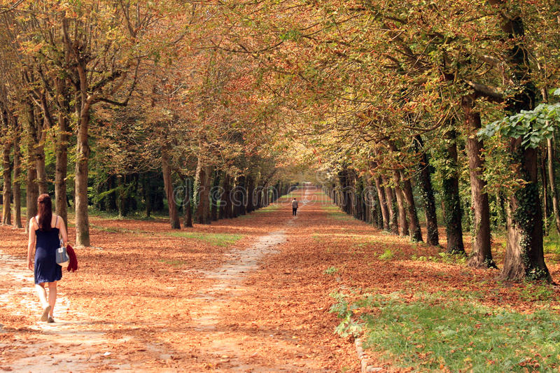 Divergent paths in autumn. In the grounds of Fontainebleau Chateau royalty free stock photo