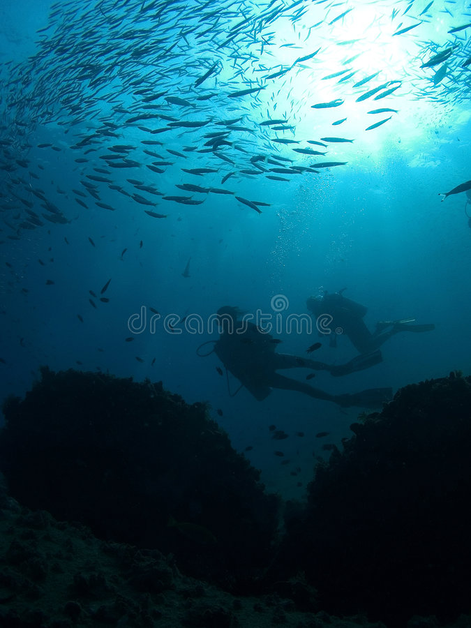 Divers royalty free stock photos