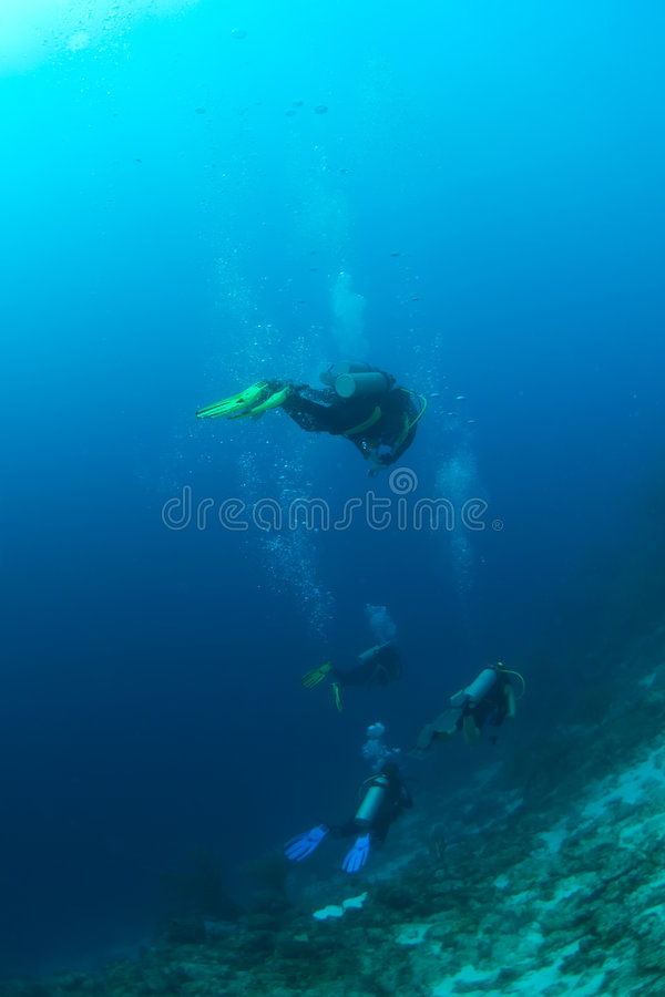 Download Divers above reef stock photo. Image of waves, underwater - 1790486