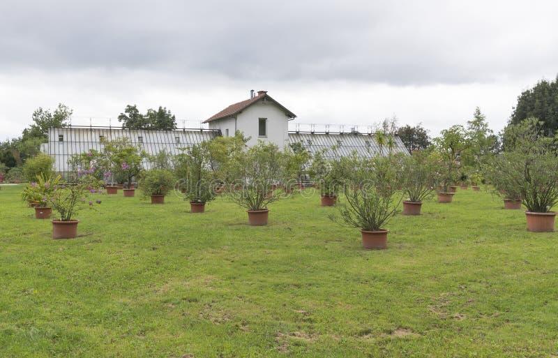 Divers arbres et usines s'élevant dans des pots extérieurs image stock