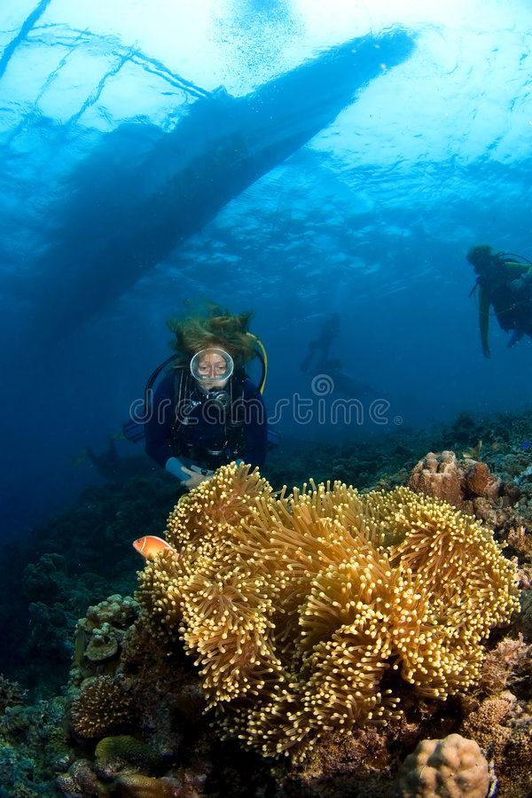 Divers and big anemone near surface Indonesia Sulawesi. Woman diver behind big anemone and soft coral near surface. The diveboat is visible. Indonesia Sulawesi royalty free stock photography